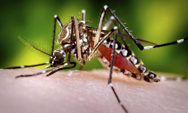 Zika Virus: Environmental Problem?