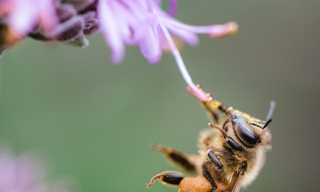 Were Bees Making an (Unheard) Statement?