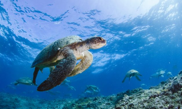 Turtle Odyssey at Fleet Science