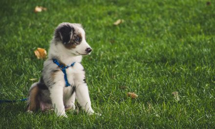 Do lawn chemicals cause canine cancer? How can you protect your dog?