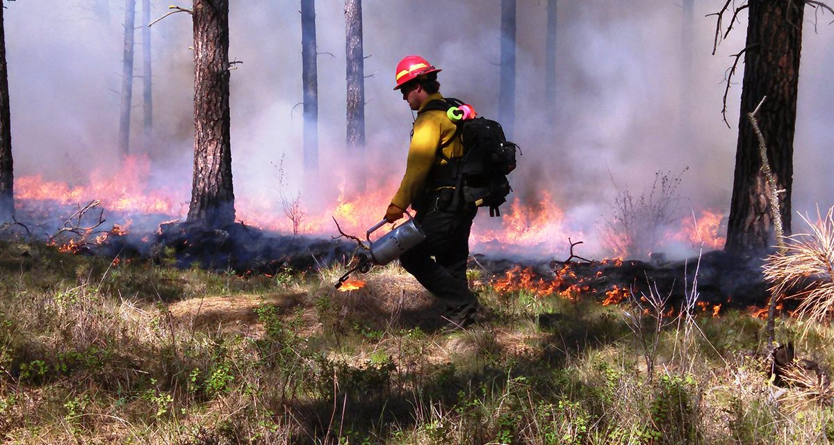 Controlled Burning in the Forest & DC