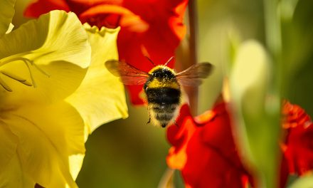 How are bee population numbers doing these days?